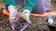 Календарь садовода и огородника апрель 2019