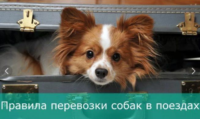 правла перевозки собак в поездах РЖД 2019