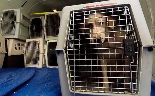 перевозка собак в переносках специальных