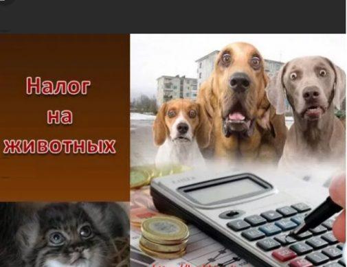 налог на домашних животных в 2019 году