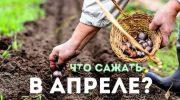 Посевной календарь на апрель 2019 года