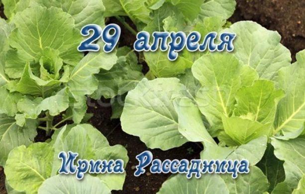 29 апреля ирина рассадница капустница
