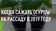 Время сажать семена огурцов на рассаду в 2019 году