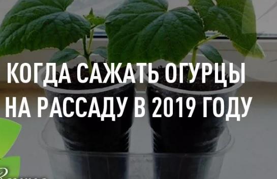 посадка огурцов на рассаду апрель 2019 года