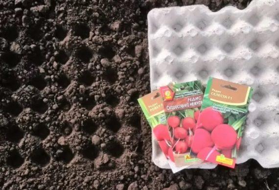 сажаем редис в открытый грунт в апреле