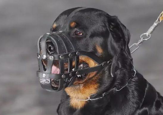 опасные породы собак в России 2019