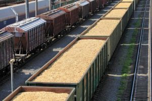 вагоны с зерном