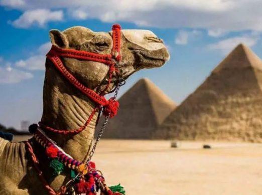 египет 2019 когда поедут тристы из россии