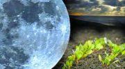 Лунный посевной календарь для огородников и садоводов на 2019 год
