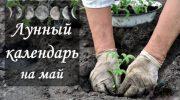 Лунный календарь садоводов и огородников на май 2019