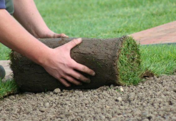 выбираем рулонный газон