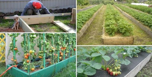 лучщие даты для посадок в огороде на июнь 2019 ггода