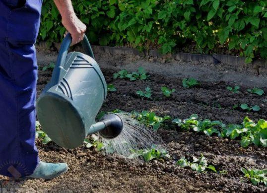 высадка рассады и работы на огороде в июне 2019