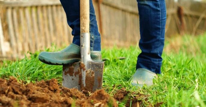 стоит ли перекапывать целину на огороде в июне