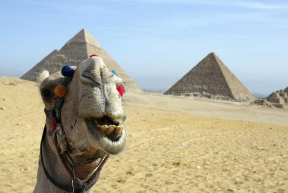 из россии в египет расписание рейсов самолетов когда можно будет летать в 2019 году