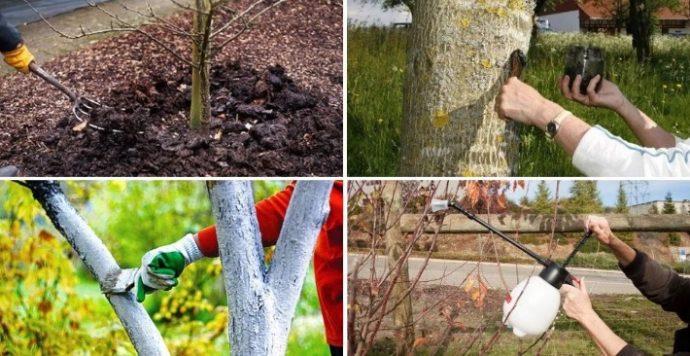 чем и когда в 2019 году опрыскивать плодовые деревья