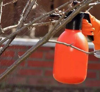 чем можно опрыскивать садовые деревья