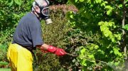 Борьба с болезнями и вредителями сада в июне