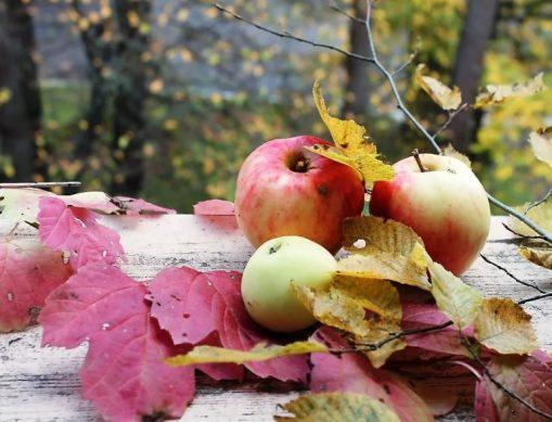 лунный календарь когда и что сажать осенью в сентябре