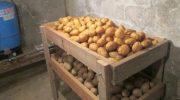 Как хранить картофель зимой в домашних условиях