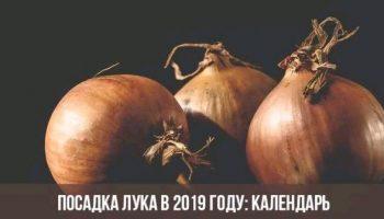 Посадка лука под зиму в ноябре 2019 по лунному календарю — все секреты